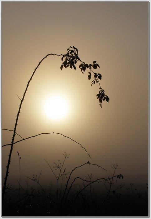 Lampion we mgle #wschód #wschody #niebo #krajobrazy #słońce #jesień #mgła #droga #drzewa #spacery