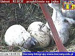 http://images11.fotosik.pl/64/cbed9ed64348c308m.jpg