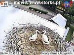 http://images11.fotosik.pl/70/7f430798ed41e845m.jpg