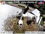 http://images11.fotosik.pl/81/b8223b69427f1776m.jpg