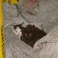 Kotki #koty #kotki #małe